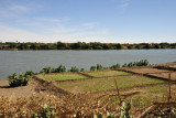 Small agricultural fields along the Nile, El Daba