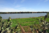 Fields along the Nile, El Daba