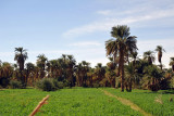 Green fields and palm trees on the banks of the Nile