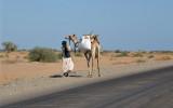 Beja man leading a camel near Port Sudan