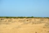 Spotting the Sudan Red Sea Resort