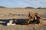 This was the first dead camel we saw, but not the last