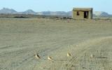 SudanDec09 1665.jpg