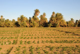 Agriculture along the Nile, Soleb