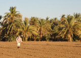 Nubian farming hoeing a field, Soleb