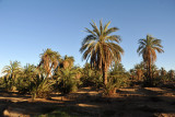 Walking through the palms to the Nile