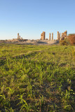 Crops growing next to the Temple of Soleb