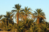 Palm trees along the Nile, Soleb