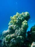 Abu Adila Reef, Sudan