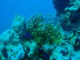 Coral, Abu Adila Reef, Sudan