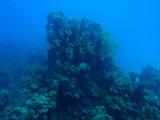 Abu Adila dive, Red Sea, Sudan