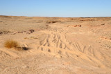 Sandy track leading to the Petrified Forest near El Kurru