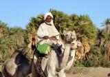 Sudanese man riding a camel between El Kurru and Karima