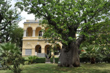 Mauritius Institute with it's old African Baobab tree
