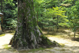 Kinaku-ji was founded in 1397