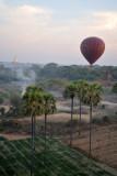Treetop view of palms and paddies, Bagan