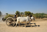Bullock Cart - a sure sign your are in rural Myanmar