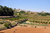 Fertile area of the West Bank north of Hebron