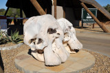 Elephant skulls at the gate to Addo Elephant National Park