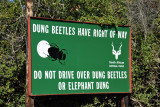 Dung Beetles Have Right of Way - Do Not Drive Over Dung Beetles or Elephant Dung