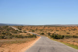 Main road through the Big Game area, Addo Elephant National Park