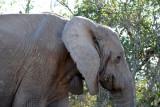 Today, Addo Elephant National Park has around 450 elephants