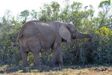 Addo Elephant National Park is 1640 square km