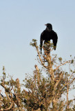SouthAfricaApr10 1462.jpg