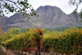 Helderberg with vineyard, Stellenbosch Winelands