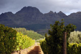 Haskell Vineyards with the Helderberg, Stellenbosch Winelands (South)