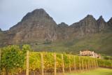 Vineyards of Uva Mira Winery, Stellenbosch
