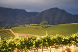 Vineyards of the south Stellenbosch mountains