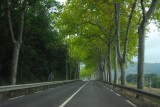 Tree-lined route D118, Aude