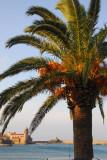 Palm, Collioure, Vermillion Coast