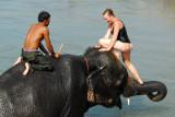 Elephant bathing time on the Sauraha riverfront