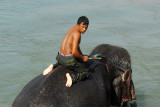 Elephant and mahout in the river, Sauraha