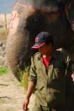 Elephant and guide, Sauraha