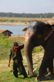 Mahout leading his elephant, Chitwan