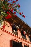Flowers and bricks, Bandipur