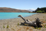 Bleached treestump, Lake Tekapo