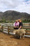 Mom and Deb with their first NZ sheep closeup