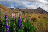 Lindis Pass Scenic Reserve