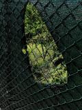 ecografia Verde