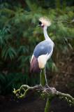 > SD Olmense Zoo