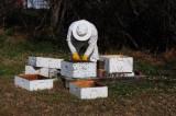 L.V.B.A. Apiary Nov. 21, 2009