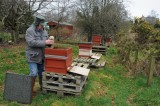 Checking bees