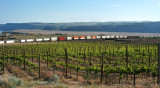 Westbound BNSF trailers and containers and stationary grapes (one PBaser works here)