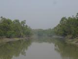 Sundarbans view