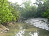 Sundarbans maze