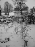 Snowy Beginning of a New Year